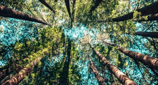 Filosofi under åben himmel: Filoso