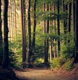 Røverhistorier i Rold - Efterårsskovtur i Rold Skov