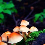 Mindful Yoga i skovens dybe stille ro