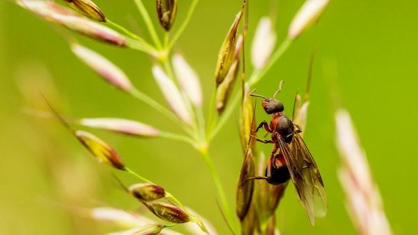 Myren og mennesket