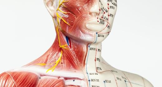 Introduktion Til Akupunktur Og Kinesisk Medicin - Punkter Og Meridianer
