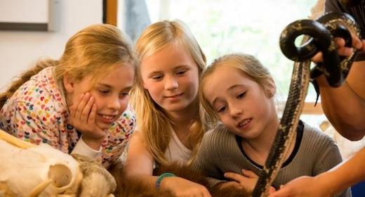 Sjov Sommer - Mød Spændende Dyr Fra Zoo