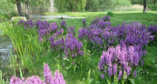 AFLYST: Orkidé-tur til Nymosen
