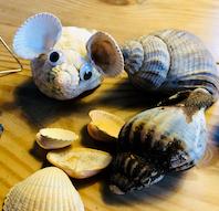 Kreative muslinger