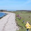 Strandtur ved Storebælt