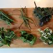 Smag på naturen - sanketur i skov og have