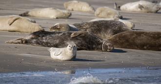 Seal safari and harbour tour on MS.  S�nderho