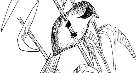 Morgen fugletur i Gråsten Slotspark