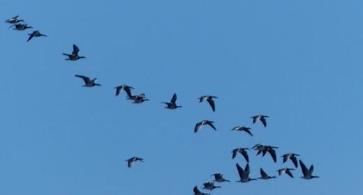 Natur erleben: Vogelkiek am Außendeich