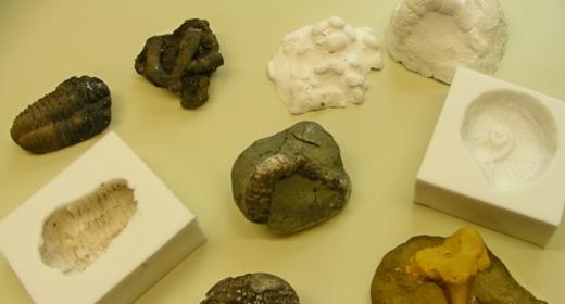 Fossilien gießen