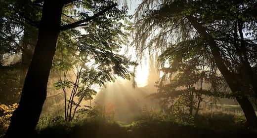 Rundvisning i Arboretet