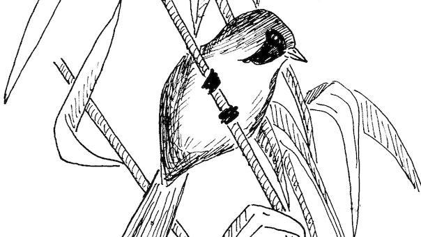 Aftenfugletur til Trillen