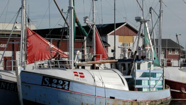 Guidet havnevandring i Grenaa