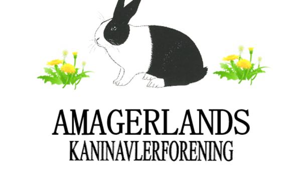 Hyggelig Kaninudstilling i Tårnby