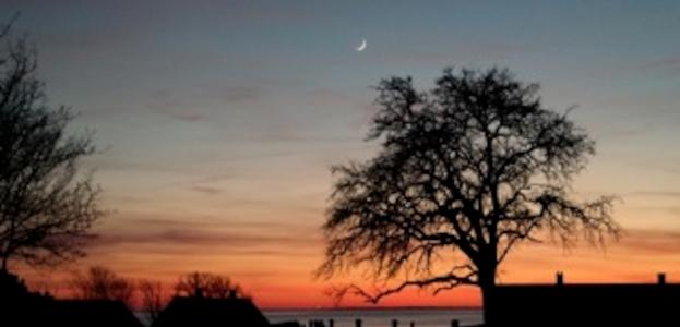 Nattens lyde og stjernehimlen i halvmåne-skær.
