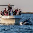 Flere datoer: Delfinsafari i Limfjorden