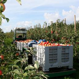 Oplev den store Rosenhave, Æbleplantage og Mosteri (på tysk).