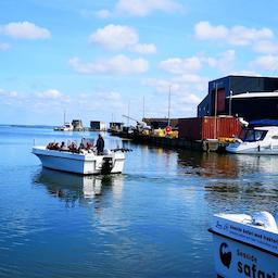 Bådtur på Ringkøbing Fjord.
