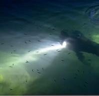 Guidet aftendyk: En særlig oplevelse under vandet