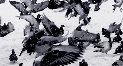 Smag på genren: Fuglene i litteraturen