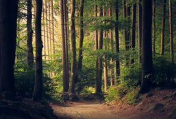 Indvielse af Folkeskoven ved Sneptrup Præstegård