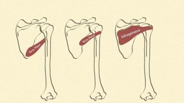 Anatomi/fysiologi - Lægeeksamineret, Modul B