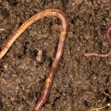 AFLYST: Den økologiske køkkenhave II: Jord, kompost og gødning