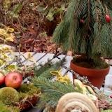 Kom og lav juledekorationer med Grøn Guide