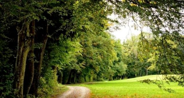 Poetisk aftenvandring om japansk økokritik: Vildgræs ved flodlejet af Hiromi Itõ