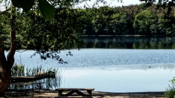 Gotvdgymnastik ved sø og skov