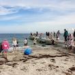 Naturdetektiver - på jagt efter strandens dyr og planter