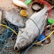Plast ved stranden og i havet