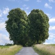 Modet til at følge dit hjerte