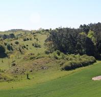 Blomster og græsningsdyr på toppen af Mols Bjerge