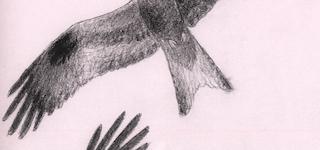De store fugle vender tilbage