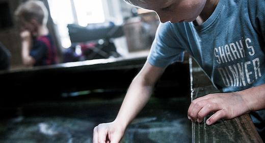 Fodring - Giv en hånd med ved hajfodringen