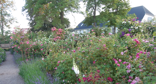Åben have på Kornerupgård 2020