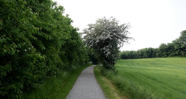 På sporet af de gamle baner - guidet cykeltur