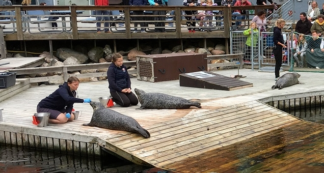 Træning og præsentation af sæler og marsvin