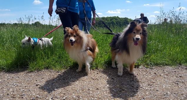 HUND FORBI - gåtur deltag med og uden hund