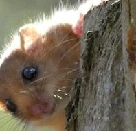 Det hemmelighedsfulde og skjulte liv i skoven