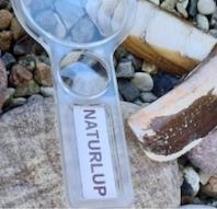 Naturdetektiver ta med på jagt efter strandens dyr og planter
