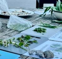 Vilde urter - Aftengåtur